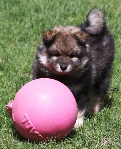 Ruka wants to play ball!