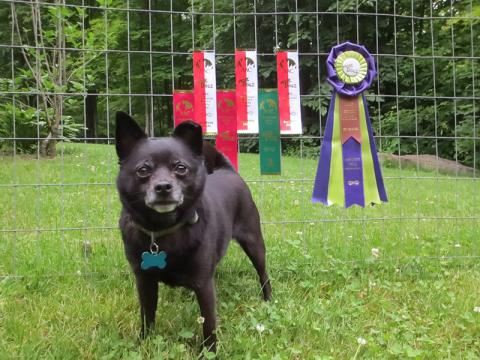 Taco earns Expert Jumpers title!