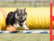 Kiire makes her Agility debut