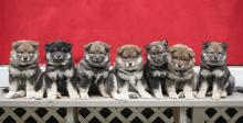 Pup line-up