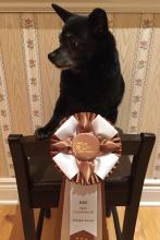 Taco takes the Bronze!